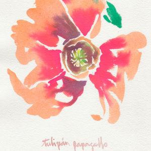 Tulipán papagallo. Venta online de acuarelas originales