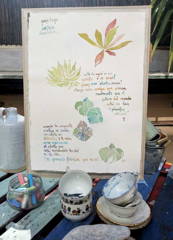 Plantas crasas. Venta online de acuarelas originales