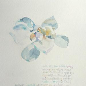 Magnolia. Venta online de acuarelas originales