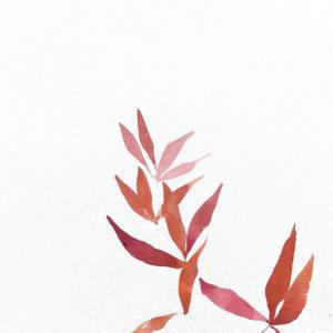 Rama de Red Robin. Venta online de acuarelas originales
