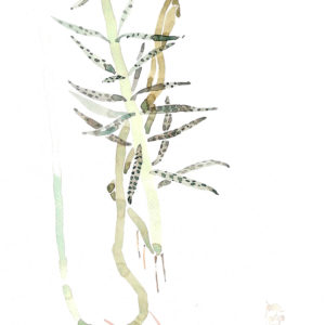 Planta marciana. Venta online de acuarelas originales