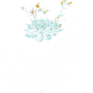 Planta crasa. Venta online de acuarelas originales
