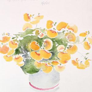 Calceolaria. Venta online de acuarelas originales