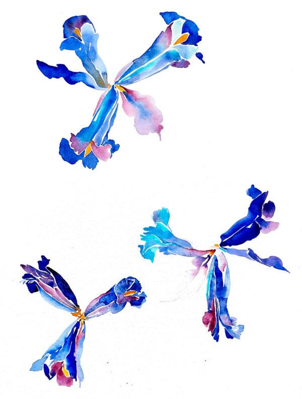 Iris. Venta online de acuarelas originales